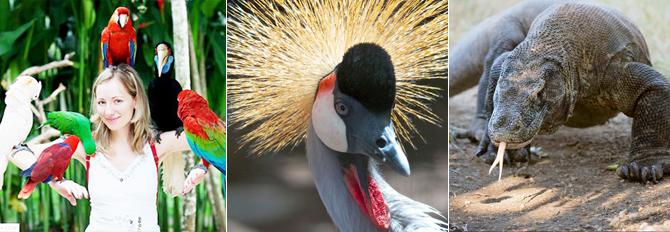 Cheap Bali Bird Park And Reptile Park Tour